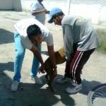Comienza campaña de vacunación antirrábica… (Foto: www.elmatamorense.com).