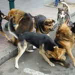 perros-vagos