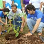 reforestar2