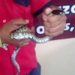 serpient_matamoros