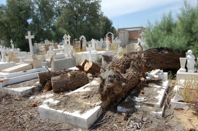 DESCUIDADO   Montones de basura por todos lados y hasta troncos de árboles encima de las tumbas es lo que hay en el Panteón Municipal de Matamoros.